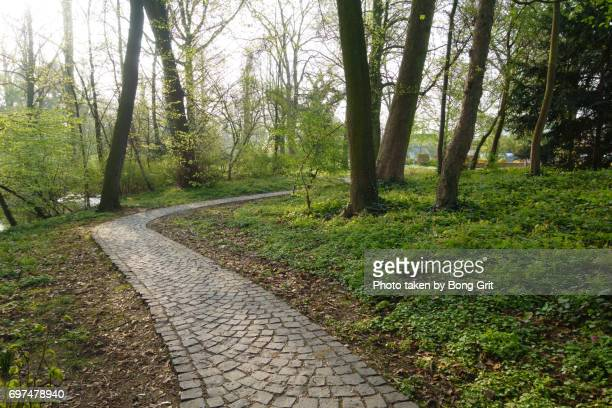 Cobbled stone pavement