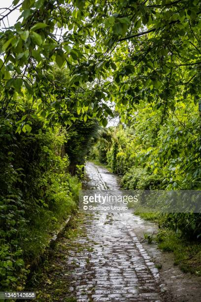 cobblestone alley in old town of watermael-boitsfort - capital region stock pictures, royalty-free photos & images