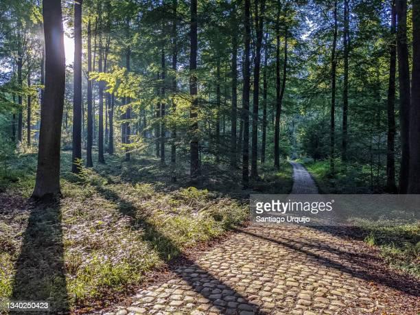cobblestone path in sonian forest - kullersten bildbanksfoton och bilder