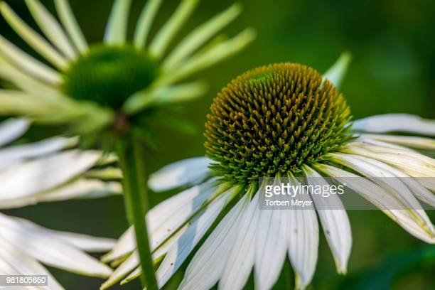 Cobourg's gorgeous flowers