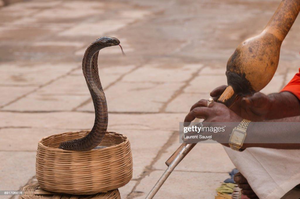 A Cobra Snake Charmer In Jaipur Rajasthan India Stock Photo
