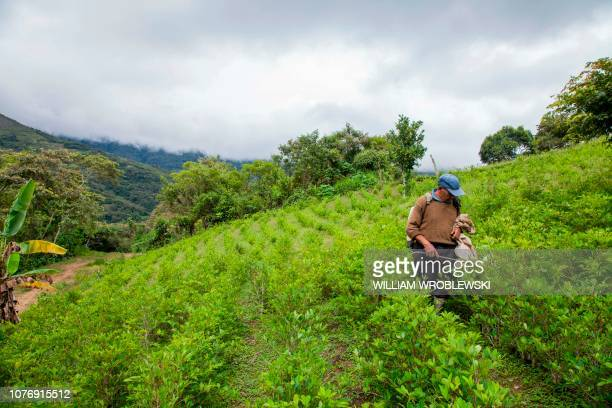 A coca farmer sprays his coca crop outside of Coroico Bolivia on December 20 2018 The use of pesticides in coca fields climate change and other...