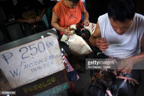 'Cock doctors' clean and stitch up the wounded and injured winning birds who survive at the Boracay Island the Philippines Cockfighting or Sabong as...