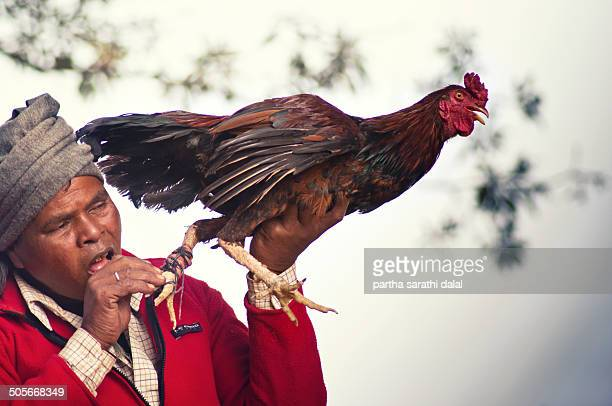 Cock fight at bankura. The man testing the knife for ready to battle