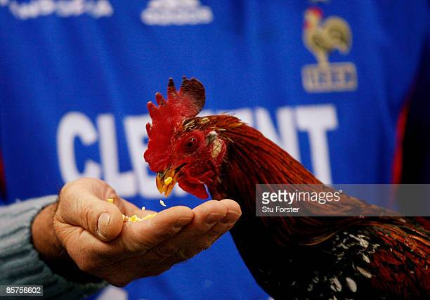 A cock is fed by a supporter before the group 7 FIFA2010 World Cup Qualifier between France and Lithuania at Saint Denis Stade de France on April 1...