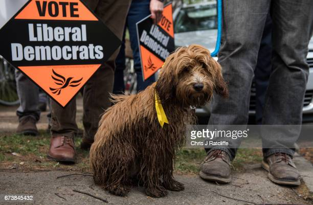 Cockapoo dog 'Bonnie' is seen amongst Liberal Democrats supporters as party leader Tim Farron campaigns for the British general election at Eastfield...