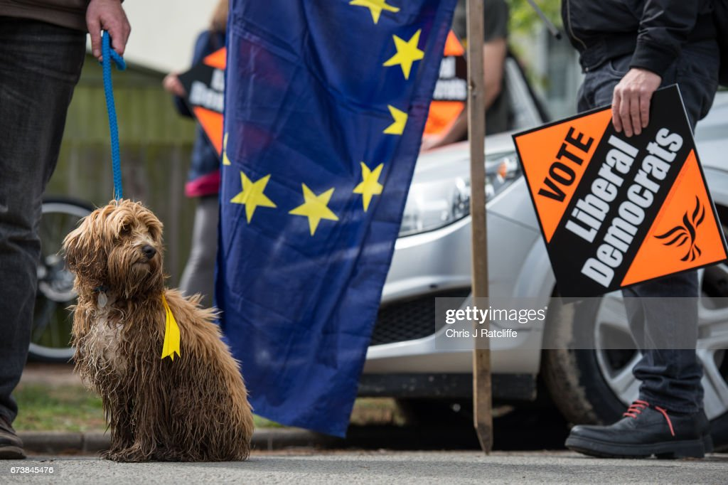 Cockapoo dog 'Bonnie' is seen next to a European Union flag and Liberal Democrats supporters as party leader Tim Farron campaigns for the British general election at Eastfield regeneration site on April 27, 2017 in Cambridge, England. Mr Farron has been campaigning in the Cambridgshire area alongside parliamentary candidate and former MP Julian Huppert, Mayoral candidate Rod Cantrill and cadidate for South Cambridgeshire Susan Van De Ven.