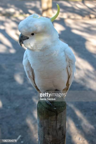 Cockatoo is waiting