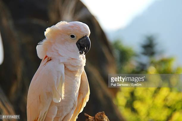 cockatoo on tree - cockatiel stock pictures, royalty-free photos & images