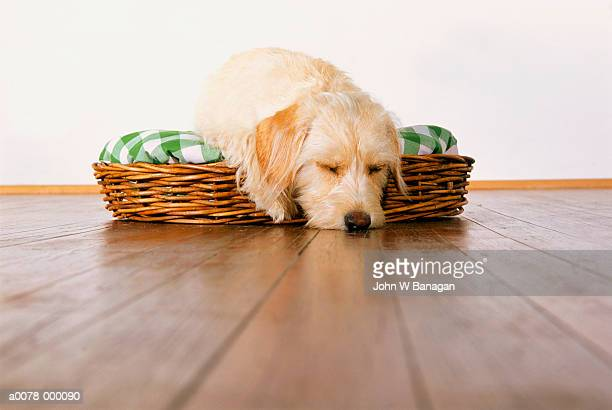 cocker spaniel in basket - basket stock pictures, royalty-free photos & images