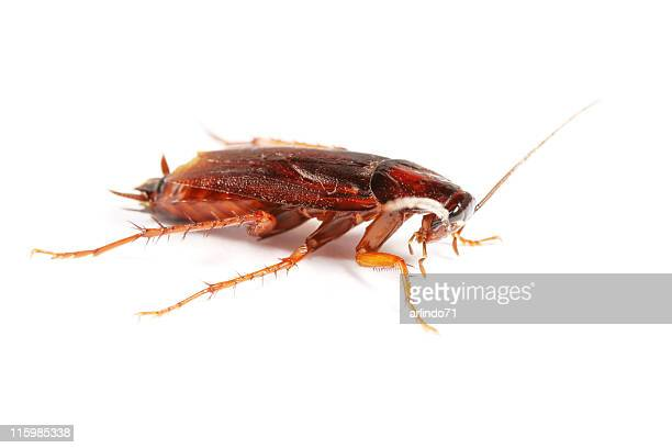 cockroach 02 - cockroach stock photos and pictures