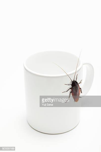 cockroach on cup