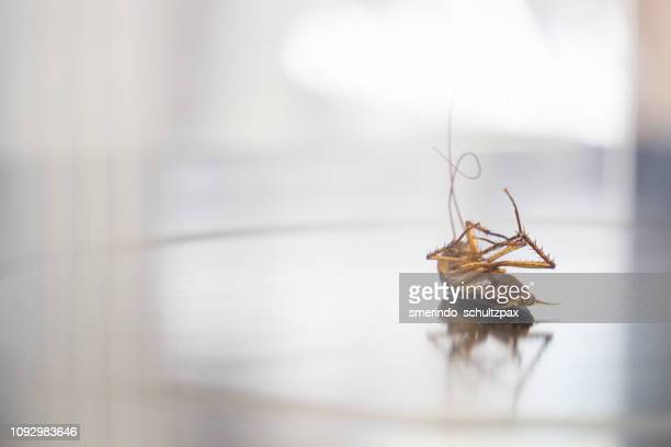 cockroach - cockroach stock pictures, royalty-free photos & images