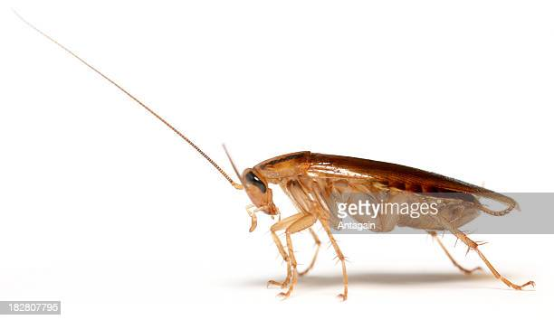 cockroach - pest stock photos and pictures