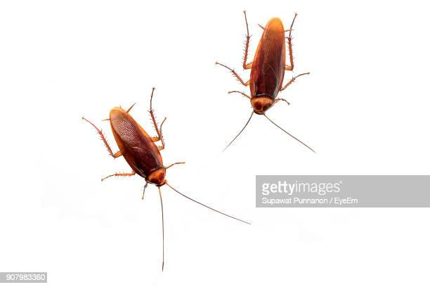 cockroaches against white background - cockroach stock photos and pictures