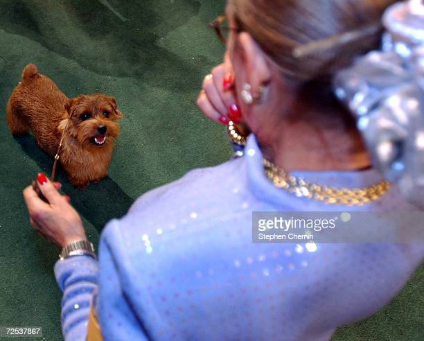 Coco a Norfolk terrier and handler Beth Sweigert look at each other before the Best In Show competition at the Westminster Kennel Club dog show...