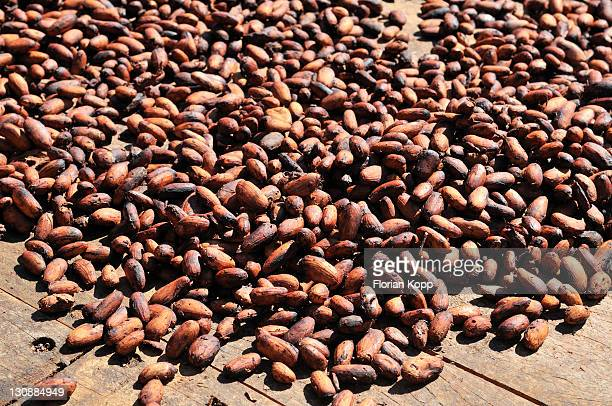 coco beans spread to dry, bolivia, south america - coco brown stock-fotos und bilder
