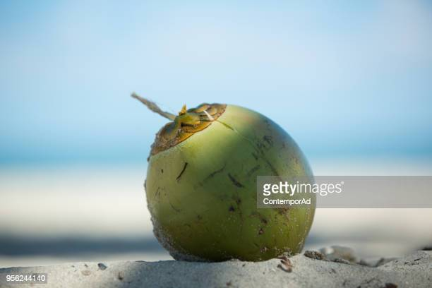 coco - coconut palm tree stock pictures, royalty-free photos & images