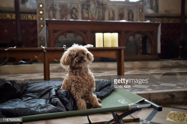 Coco the dog sits on a bed at St Mary's Church, where guests can pay to stay overnight in what is known as 'champing', in Edlesborough,...