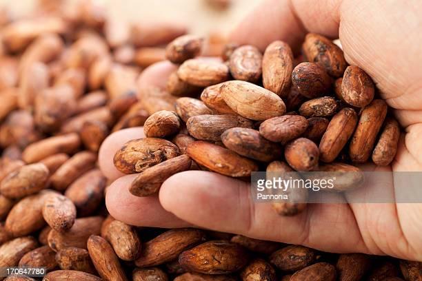 Cocoa Bean in Mann Hand