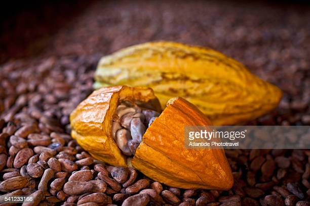 Cocoa beans at Vieux Habitants in the Grande Rivière valley