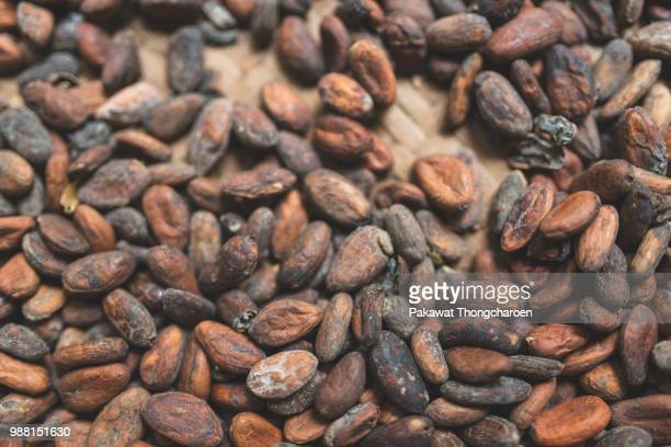cocoa beans, bali, indonesia - cocoa bean stock photos and pictures
