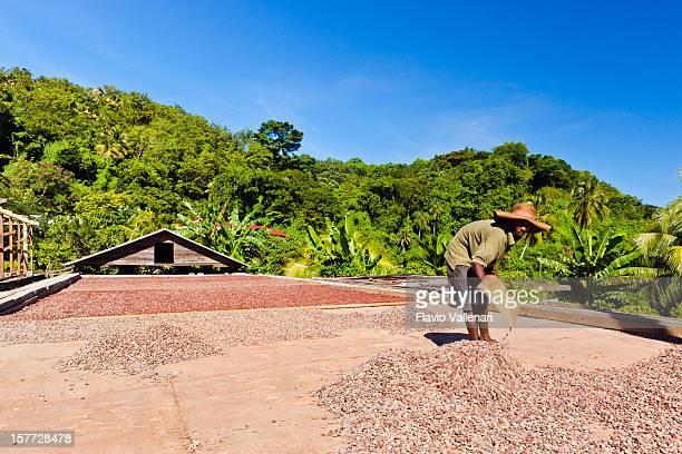 Cocoa Beans Dryer, Grenada W.I.