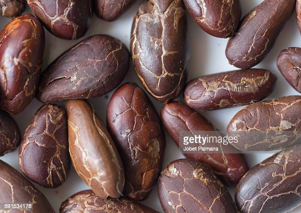 cocoa beans - cacao tree stock photos and pictures