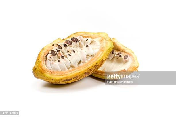 cocoa cocao bean