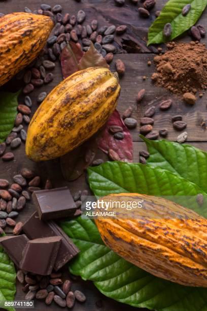 kakao komposition - theobroma stock-fotos und bilder
