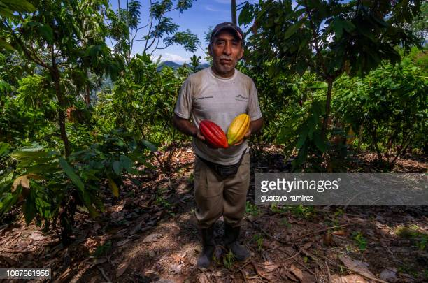 cocoa farmer in the jungle of ayacucho in the country of peru - theobroma stock photos and pictures