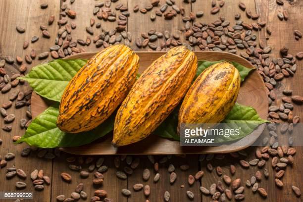 Composición del fruto de cacao