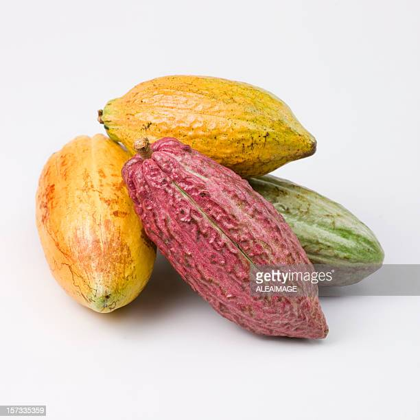 cocoa fruits - flowering plant stock photos and pictures