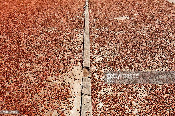 Cocoa harvest on the Millot plantation in the North West of Madagascar facing Nosy Be one of the island's oldest and most famous plantations Drying...