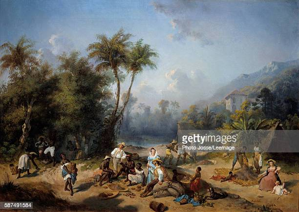 A cocoa plantation in the West Indies Painting by Alexandre Solde 19th century 05 x 07 m New World Museum La Rochelle France