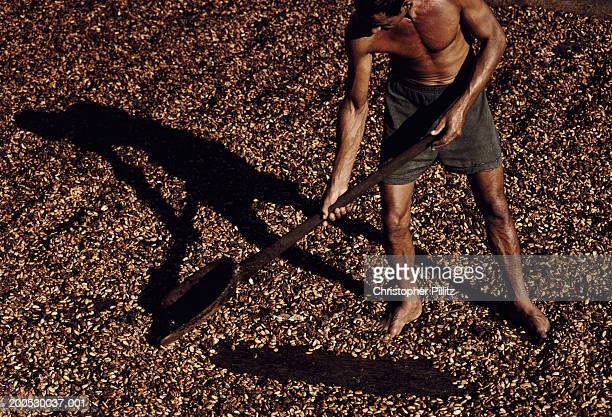 A Cocoa plantation worker drying beans on top of a wood fired oven, Bahia, Brazil