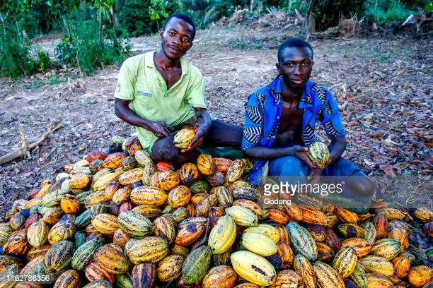 Cocoa planters sitting on pods near Agboville, Ivory Coast.