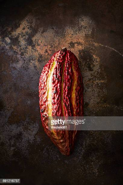 Cocoa pod on rusty ground