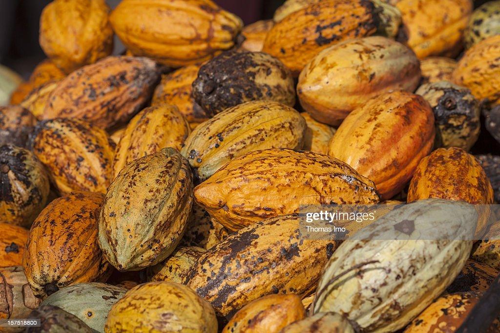 Cocoa pods at a plantation in Mondoni, Cameroon : News Photo