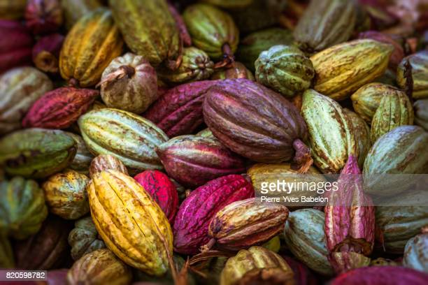 cocoa pods - madagascar stock photos and pictures