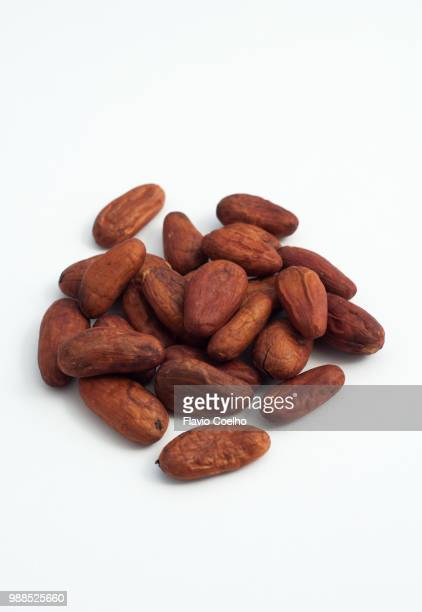 Cocoa seeds on white background