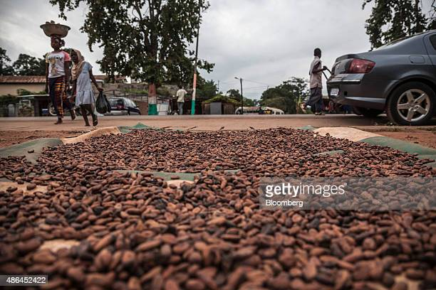 Cocoa seeds sit on mats to dry on a roadside in Agboville Ivory Coast on Tuesday Sept 1 2015 Ivory Coast will produce about 17 million metric tons of...