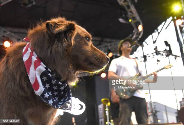 Cocoa the tour dog and Scott Woodruff of Stick Figure perform during the 2017 Life is Beautiful Festival on September 23 2017 in Las Vegas Nevada