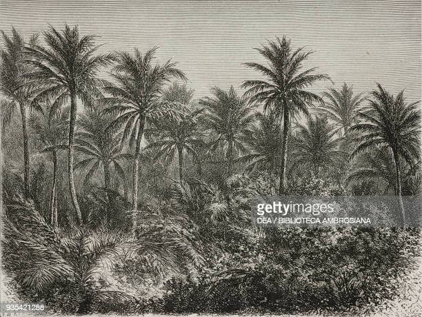 Cocoa trees between Galle and Colombo Sri Lanka engraving from India travel in Central India and Bengal by Louis Rousselet