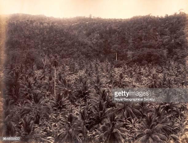 Cocoanut and banana valley at Oracabessa Saint Mary Jamaica 1891