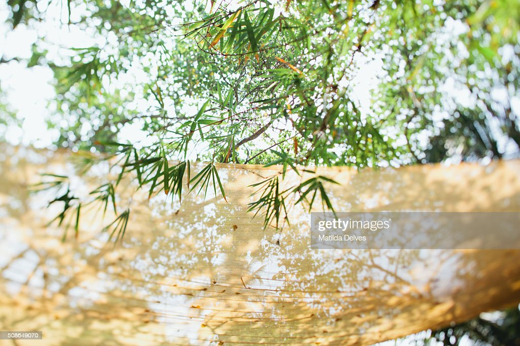 Coconut and bamboo leaves, Goa, India : Stock Photo