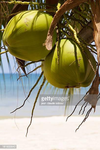 Coconut at Thung Wua Laen Beach