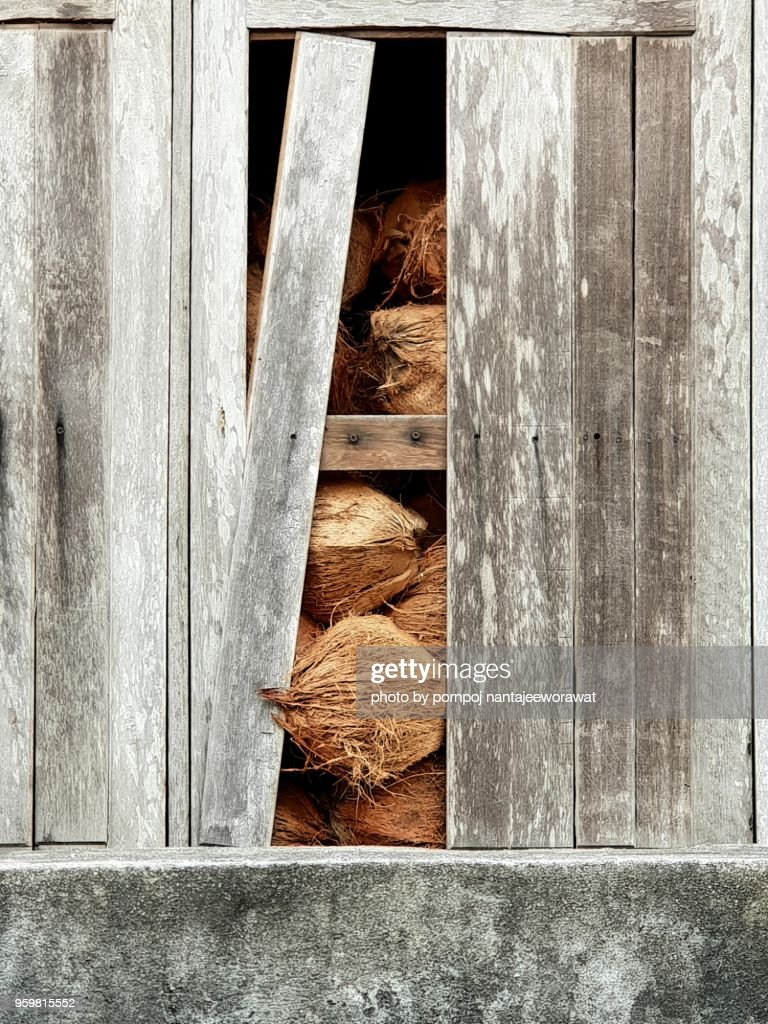 Coconut behind wooden warehouse wall. : Stock-Foto