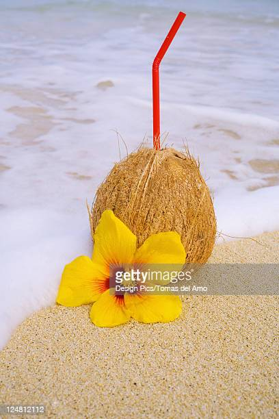 A coconut drink with straw sticking out and flowers on a tropical beach.