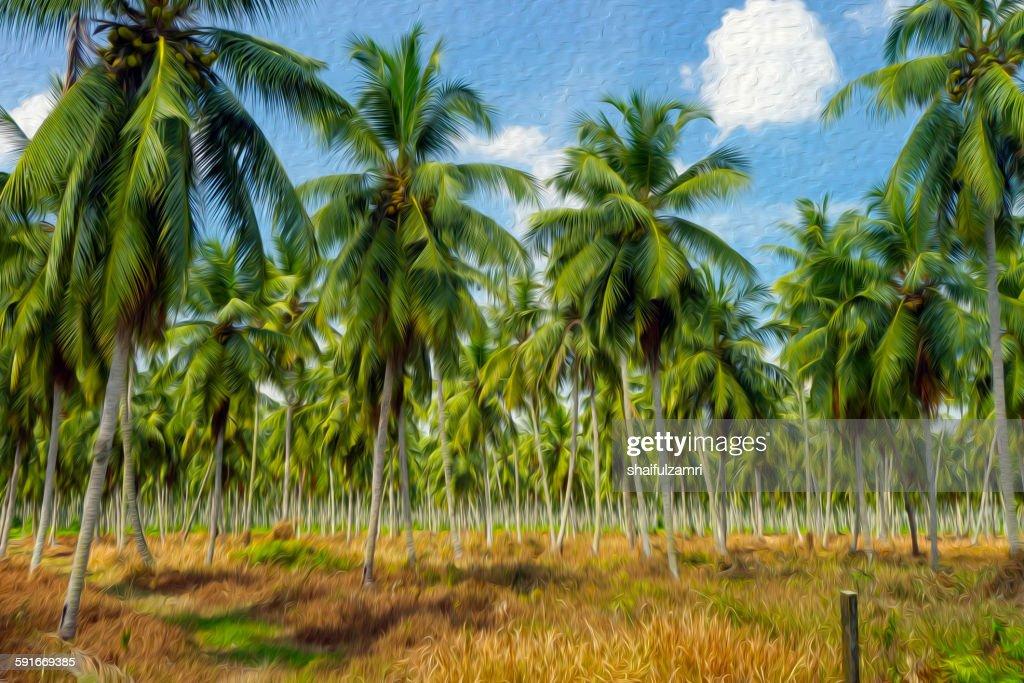 Coconut farm in Perak : Stock Photo